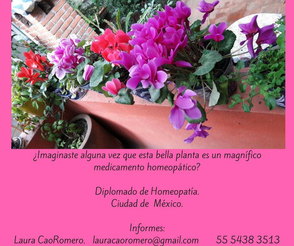 F Diplomado en Medicina Homeopática con el Doctor Francisco Lugo, dirigido a médicos, enfermeras, parteras, interesados en acompañar la salud con esta medicina.Plática informativ